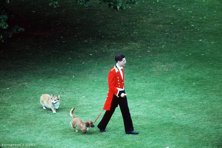 Egy királyi kutyasétáltató 1993-ban.