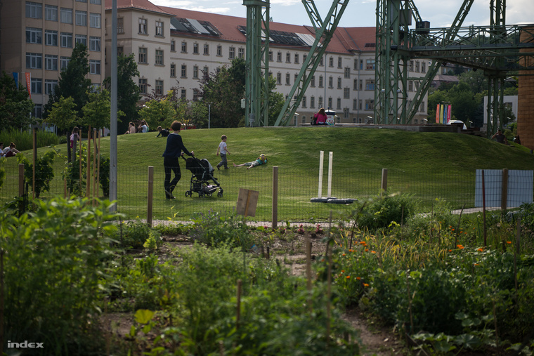 Közösségi kert a Millenáris parkban