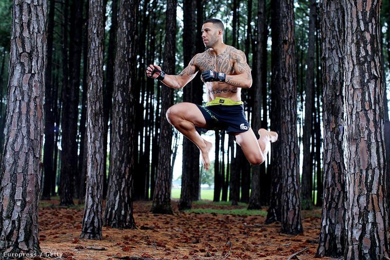 Ketrecharcos az erdőben