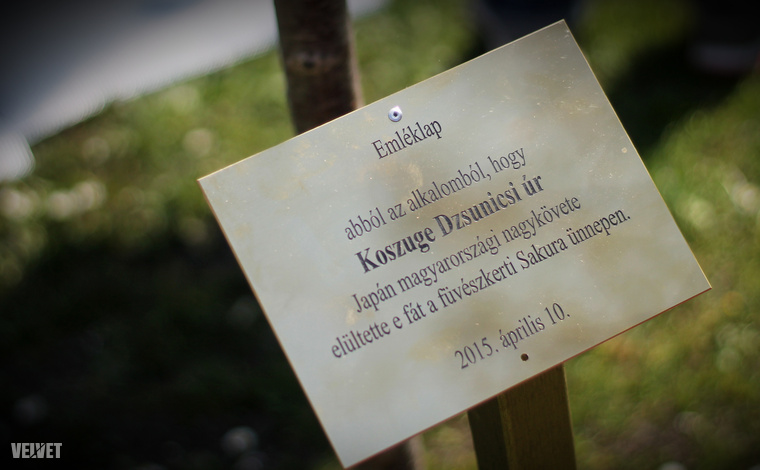 Érdekesség: minden évben a mindenkori japán nagykövet ellátogat a kertbe és ültet egy fát