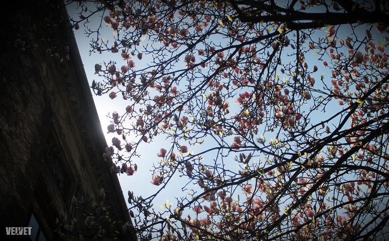 Akadt olyan év, amikor alig virágoztak a fák és az idő is hűvös volt