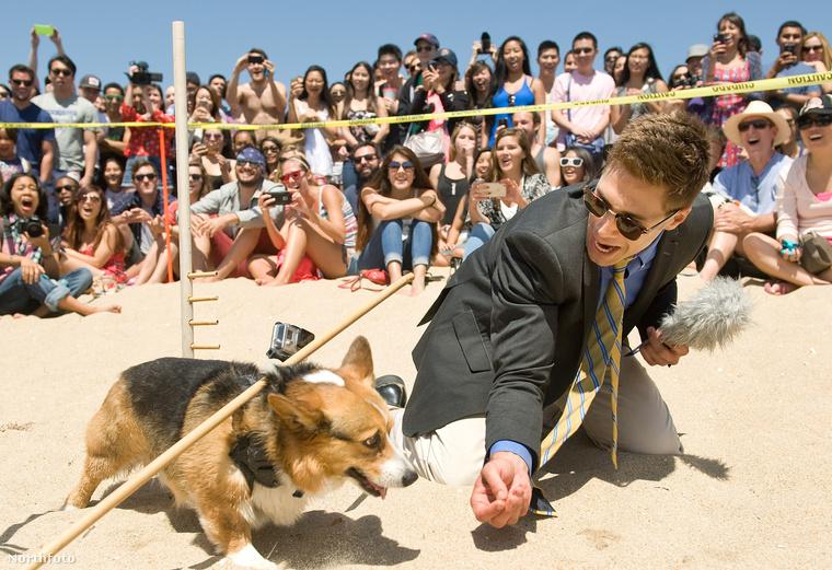 Azóta számuk egyre nő, aLAist szerint 634 kutya vett részt a Huntington Beachen megrendezett eseményen, ahol többféle, például jelmez-és limbóverseny is volt