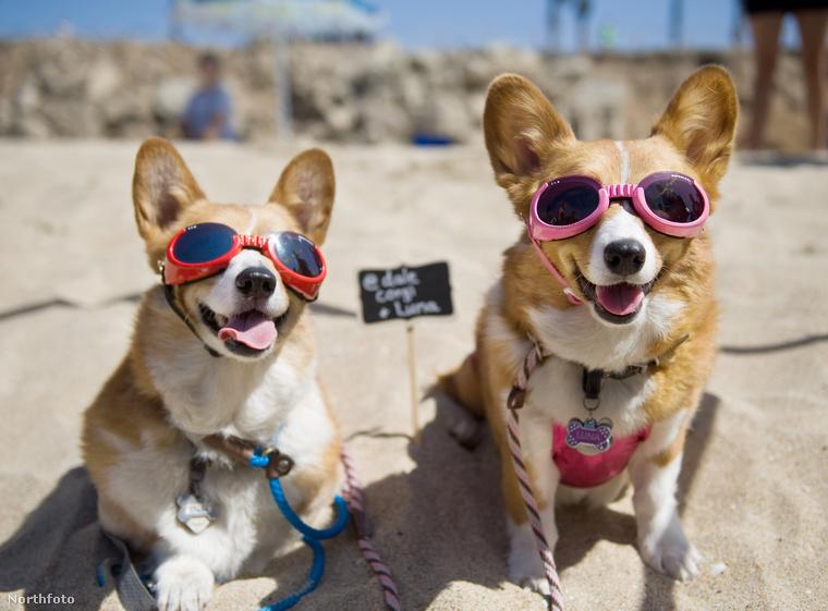 Inkább nézze meg újra a legmenőbb kutyákat világon
