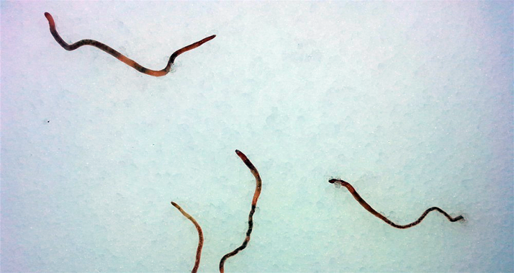 121-worms-fall-940-740x394.png