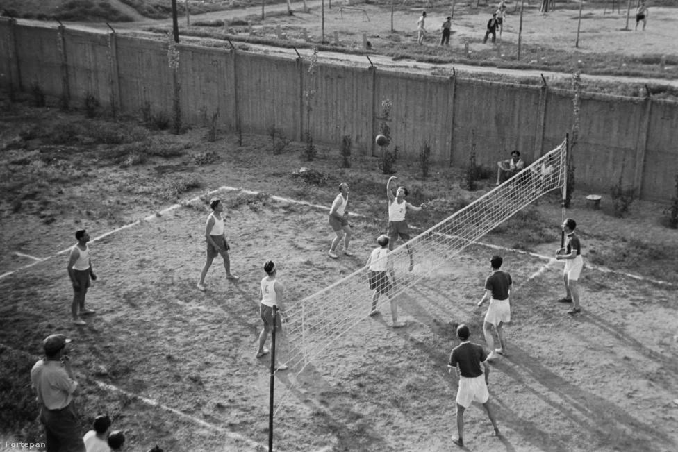 Röplabda. Soha nem szereztünk olimpiai érmet. A kép 1949-ben készült, abban az évben a Csepel lett a bajnok. Első ránézésre úgy tűnik, hogy strandröplabdát űznek a képen szereplő játékosok, valójában akkoriban még nem teremsport volt a röplabda, később vált azzá.