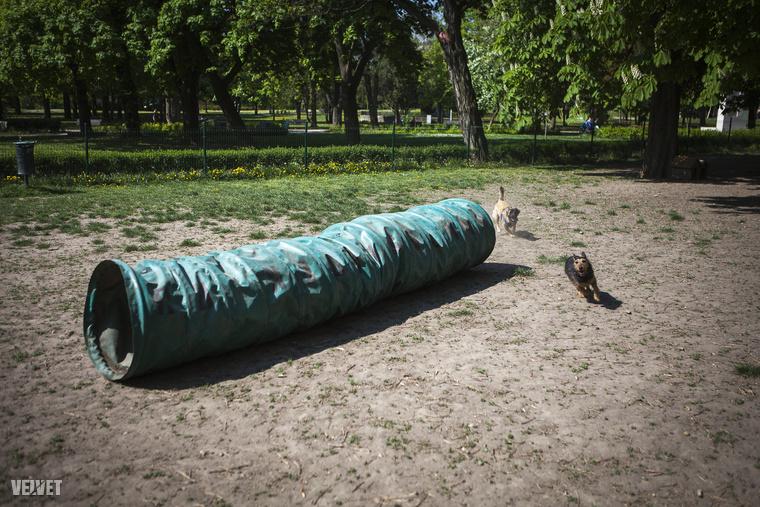 és az agility játékok is hasonlók a kutyaiskoláékhoz