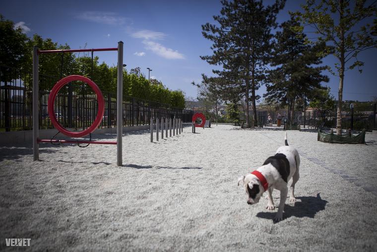 Az agility pálya olyan anyagokból készült, ami bírja az időjárást és a kutyákat