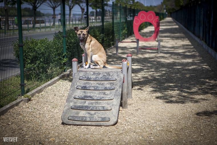 Budapesten több mint száz kutyafuttató lehet, a belvárosi kerületek kutyafuttatóit végignézve nem találni két egyformát