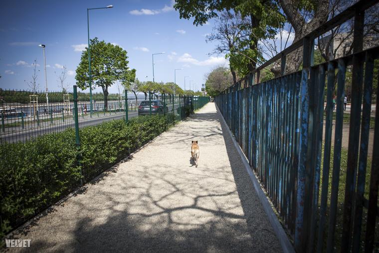 Aminek az előnye egyben a hátránya is: túl keskeny és hosszú a futtató nagy része, így a kutyák könnyen előre rohannak, ahol bármi történhet, ha nincs ott a gazdi