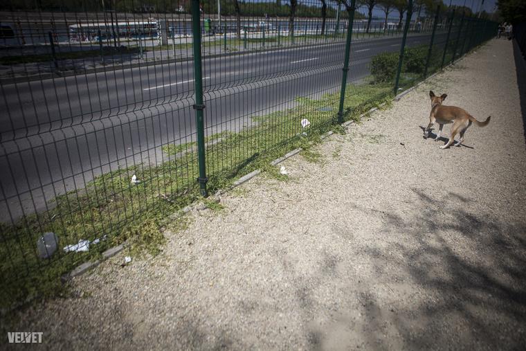 A szemét egy részét nem a kutyák termelik ennél a futtatónál, hanem a parkból és az autókból kerül az út szélére