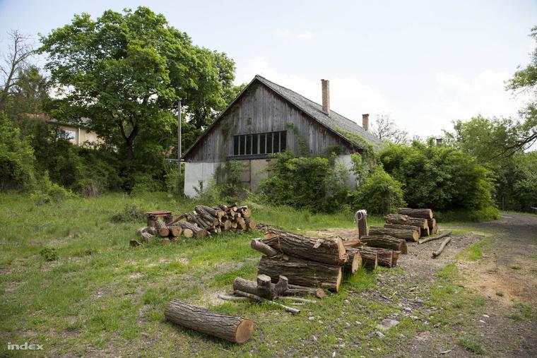 Fatelep T. Z. egercsehi házának birtokán, ahol fenyőfaültetvény és szökőkút is van