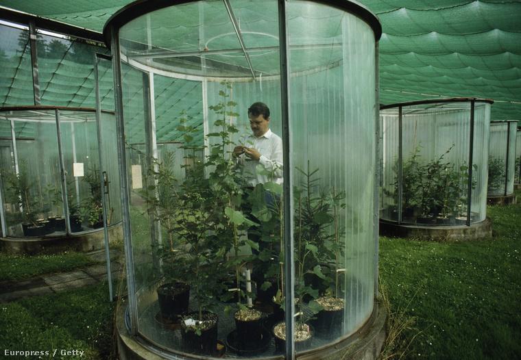 Az ózonréteg változásainak növényekre gyakorolt hatását vizsgálják egy skót kutatóközpontban.