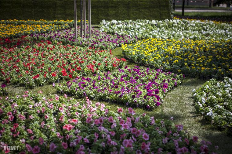 Egyaránt voltak cserepes és vágott virágok is: rózsa, liliom, kála, gerbera, krizantém, petúnia, begónia, bársonyvirág, paprikavirág, mézvirág várta az érdeklődőket