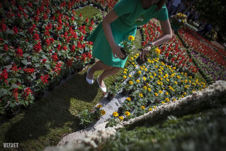 A hoszteszek fáradhatatlanul osztogatták szét a virágokat, mindenkivel kedvesek voltak.