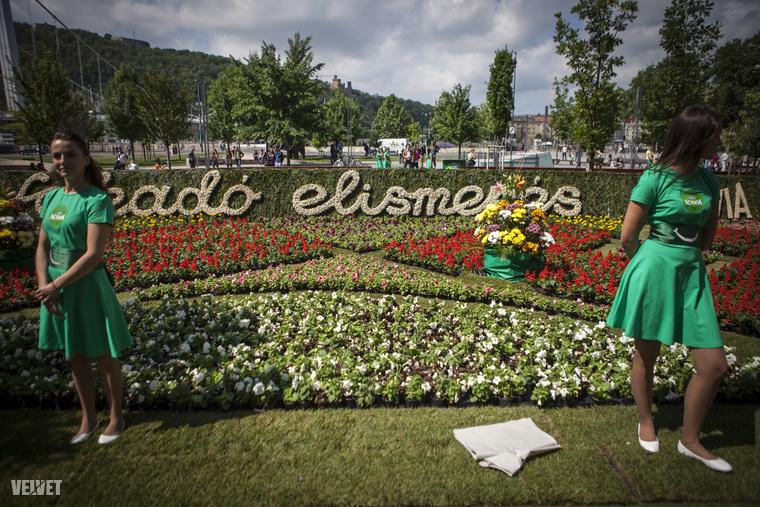 Május 24-e vasárnap délelőttre 40 ezer virágból álló szőnyeget húztak fel a budapesti Március 15