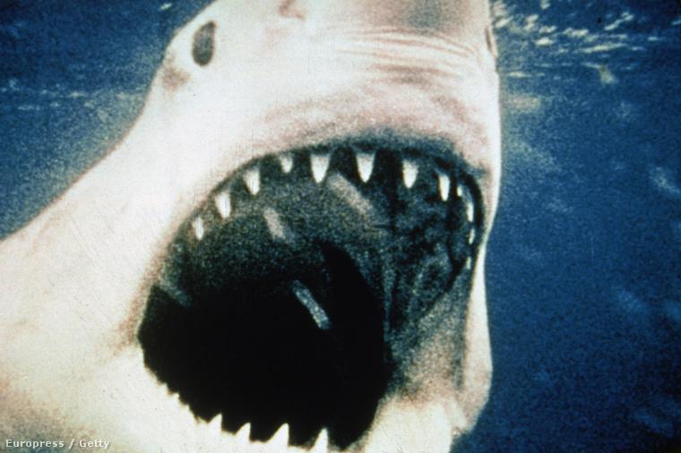 A Peter Benchley regénye alapján készült Cápát Steven Spielberg rendezésében 1975 június elsején mutatták be az USA-ban, azóta pedig már elmúlt negyven év.