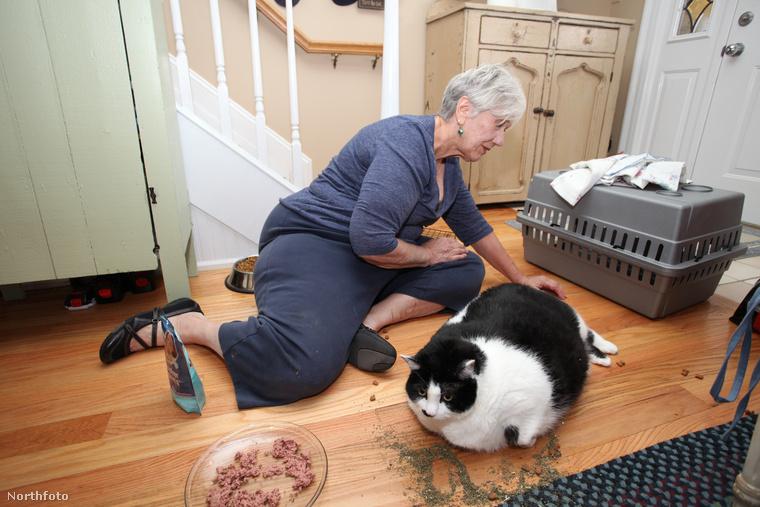 Amikor a 71 éves gazdájához került, tiszta pisi volt a hátsó fele, mert Sprinkles nem tudta elérni, olyan duci
