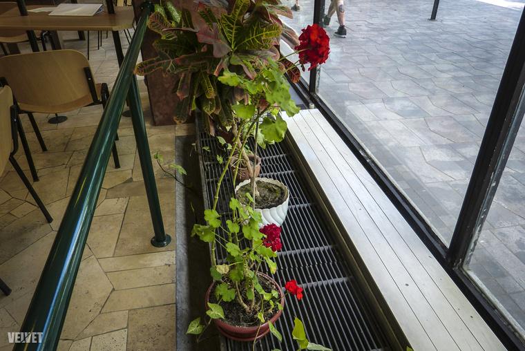 Valahogy nem övezi rajongás Budapestnek ezt a kis anakronisztikus szegletét, pedig a fizikai körülményekhez általában kedves ügyintézőnők társulnak, akik olykor megértően néznek, ha az ember utóvizsga-csekket fizet be náluk.