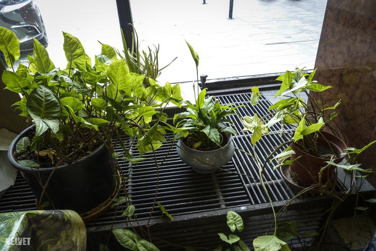 És mindegyik növény él! (A bal alsó sarokban a gyerekeknek kijelölt asztalka menő, állatos viaszosvászon-terítő csücske látható, elefántrészlettel