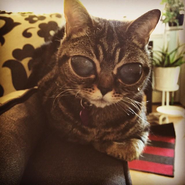 Ő itt Matilda, aki annyira menő macska, hogy saját Instagram és weboldala is van