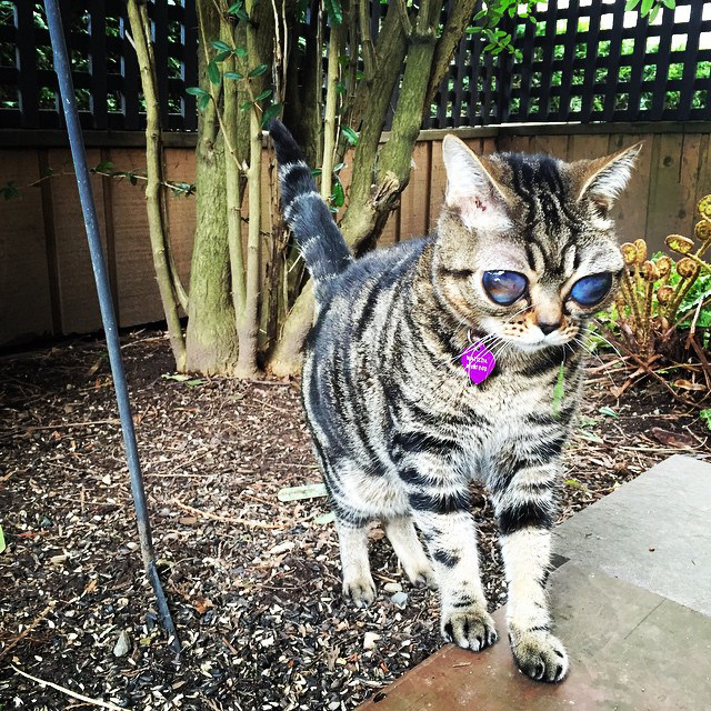 Rendszeresen jár állatorvoshoz, és bizarr kinézete ellenére csuda boldog macskaélete van.