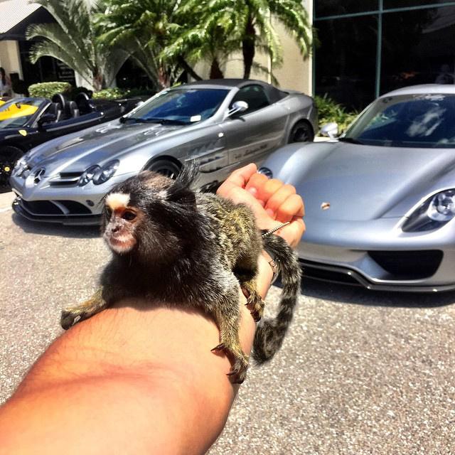 Ő azt írta, hogy ezen a képen két kedvenc dolga is látható: egzotikus állatok és egzotikus autók.