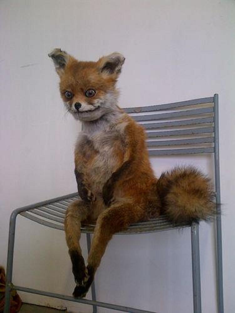 Vagy a széken merengő rókát