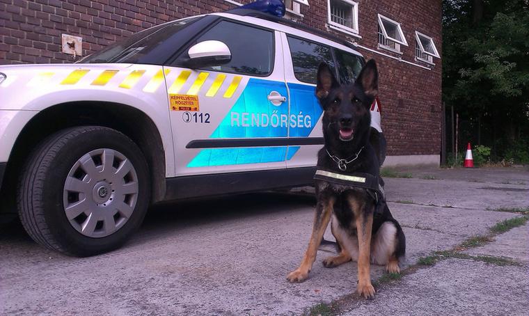 Pedig így volt! A siófoki rendőrök Málna nevű kutyája szagolt ki egy tolvajt a segítségével.