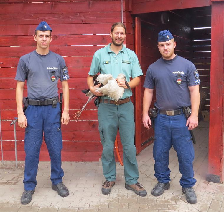 De valami jó is: gólyát mentettek a jászladányi rendőrök