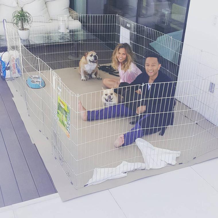 Három kutyájukkal tökéletesnek tűnik az életük