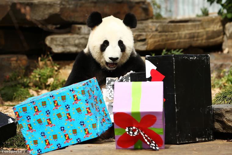 És el sem hiszi, hogy ez a sok ajándék mind az övé