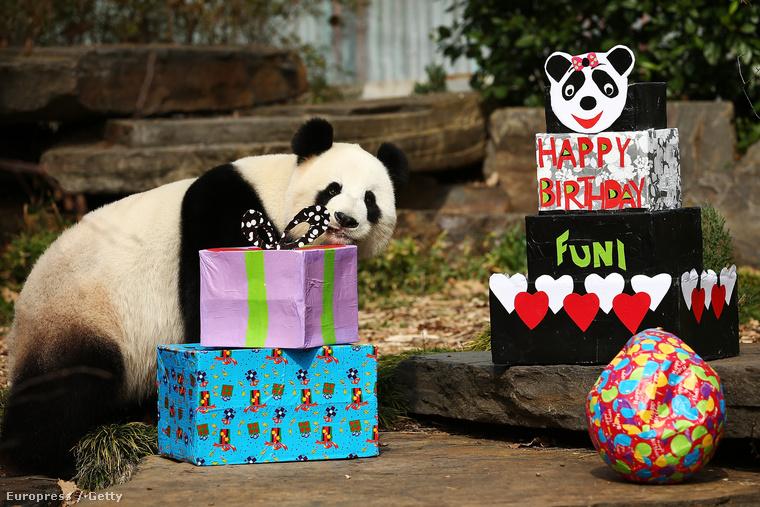 Volt már pandás szülinapi zsúrban? Mármint olyanban, ahol az ünnepelt egy panda? Hihetetlenül cuki