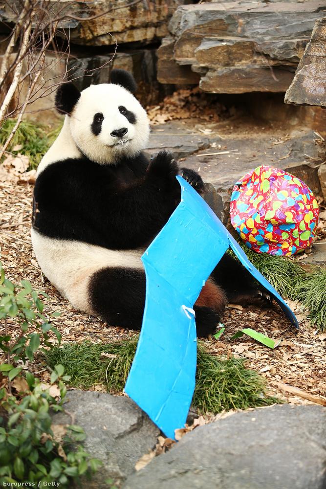 Amit persze meg kell ünnepelni, főleg ha ennyire örül neki az ünnepelt.