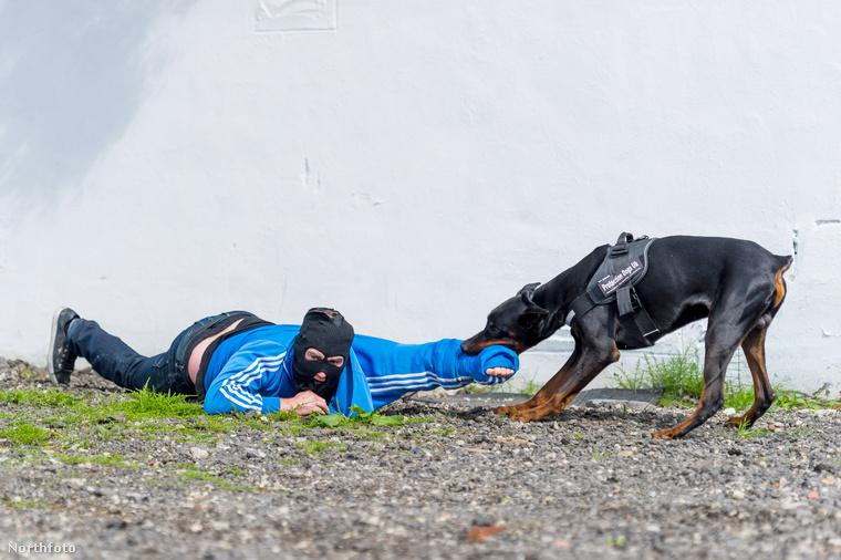 És utána az ön kutyája is ilyen kedves lesz a betörőkkel